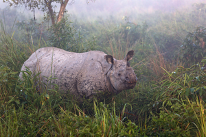 Rhino in Kaziranga National Park, India