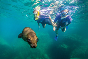 Snorkelling with sea lions in the Sea of Cortez