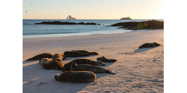 Silversea family Galapagos cruise - read our review to find out more