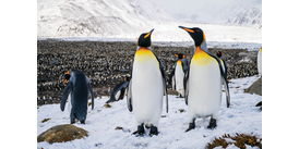 Penguins photographed on a cruise at one of the best times to visit Antarctica