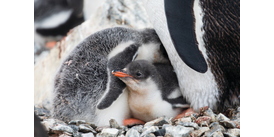 Penguin chicks in Antarctica - be inspired with our selection of books, films and TV shows