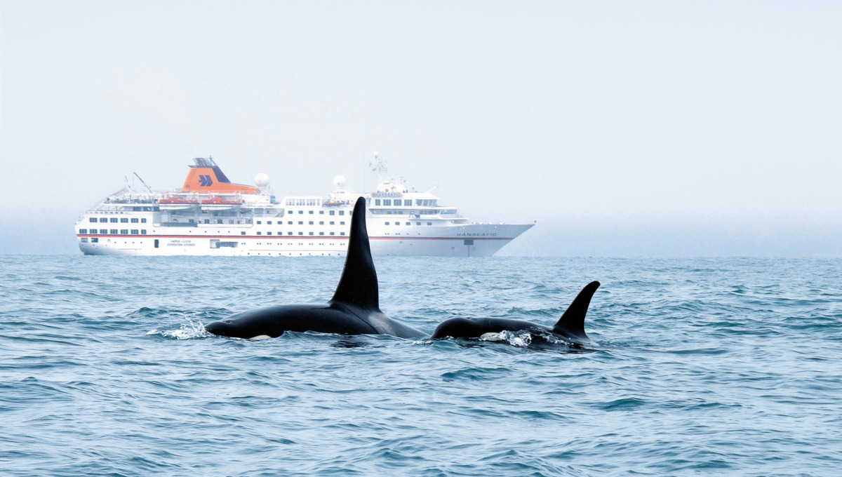 Hanseatic and Killer Whales