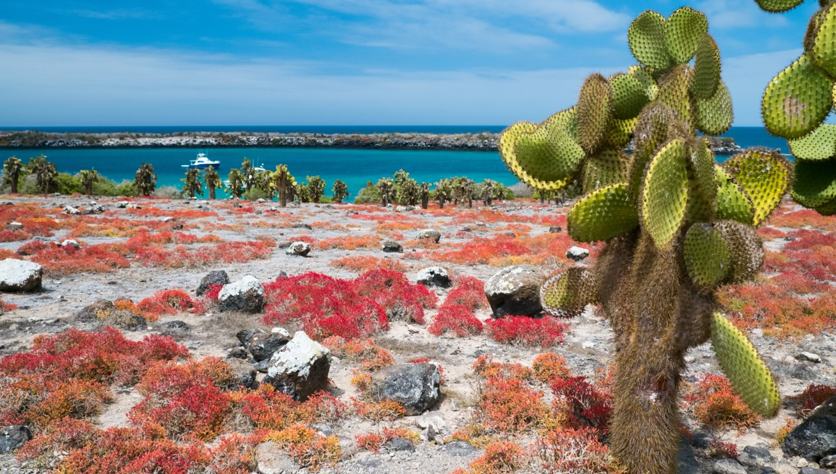 Vegetation on South Plaza island, Galapagos
