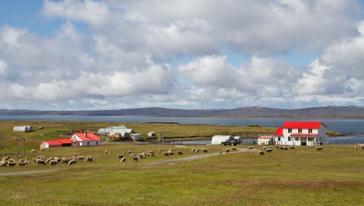 Visiting the Falklands Islands on an Antarctica cruise