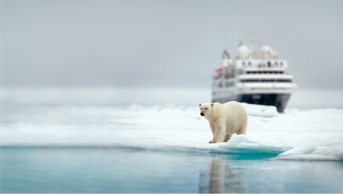 Silver Explorer - Polar bear in the Arctic