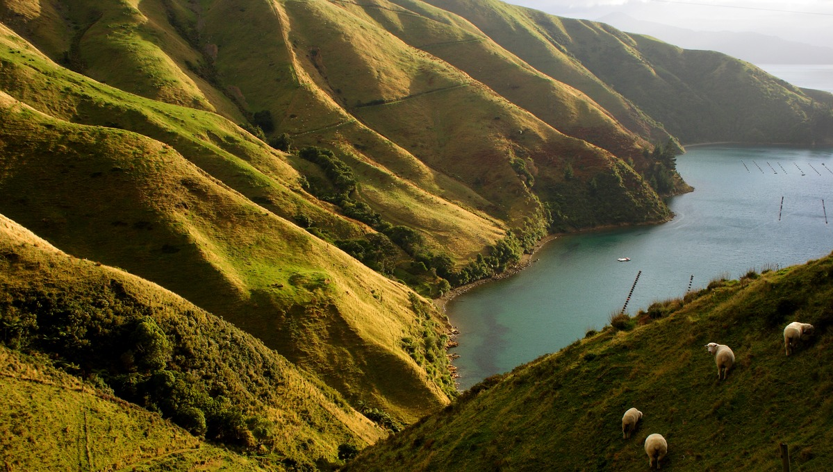 New Zealand expedition cruises - Marlborough Sound