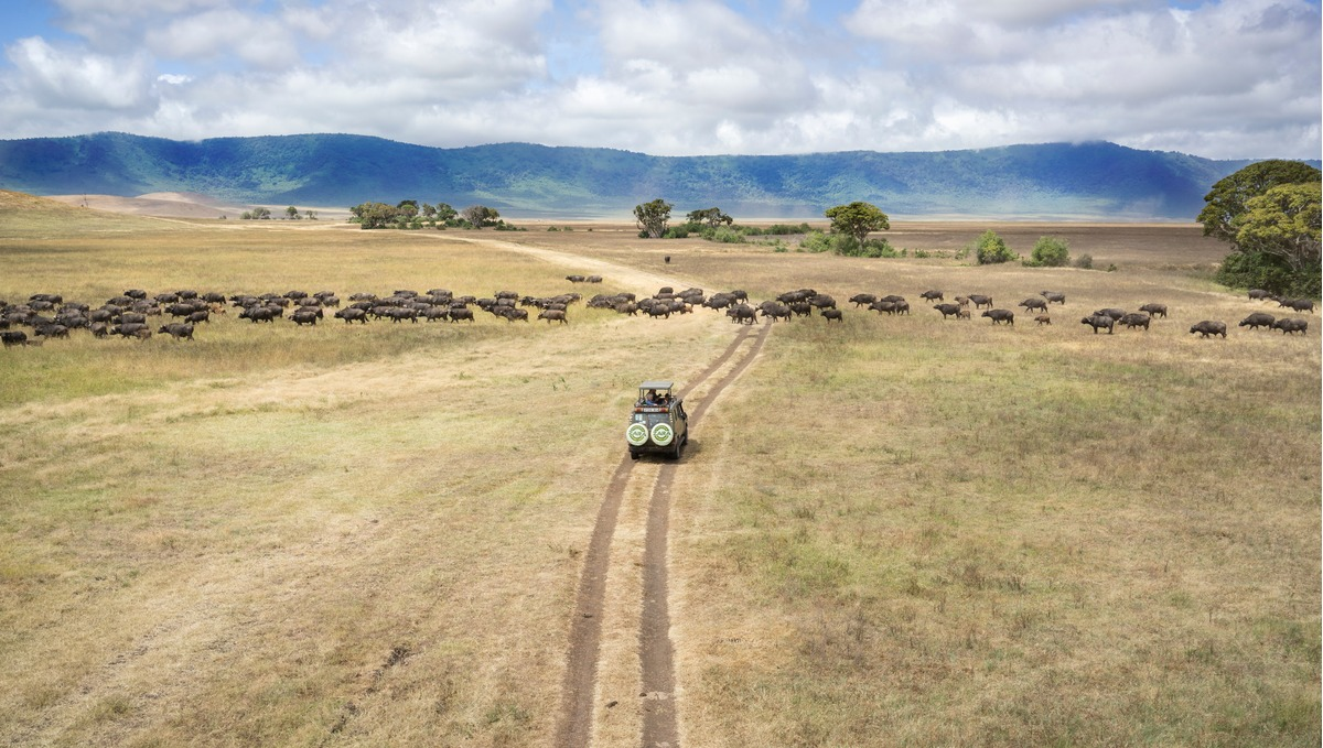 Exploring the Serengeti, part of Silversea's Couture Collection of luxury cruise and tour holidays