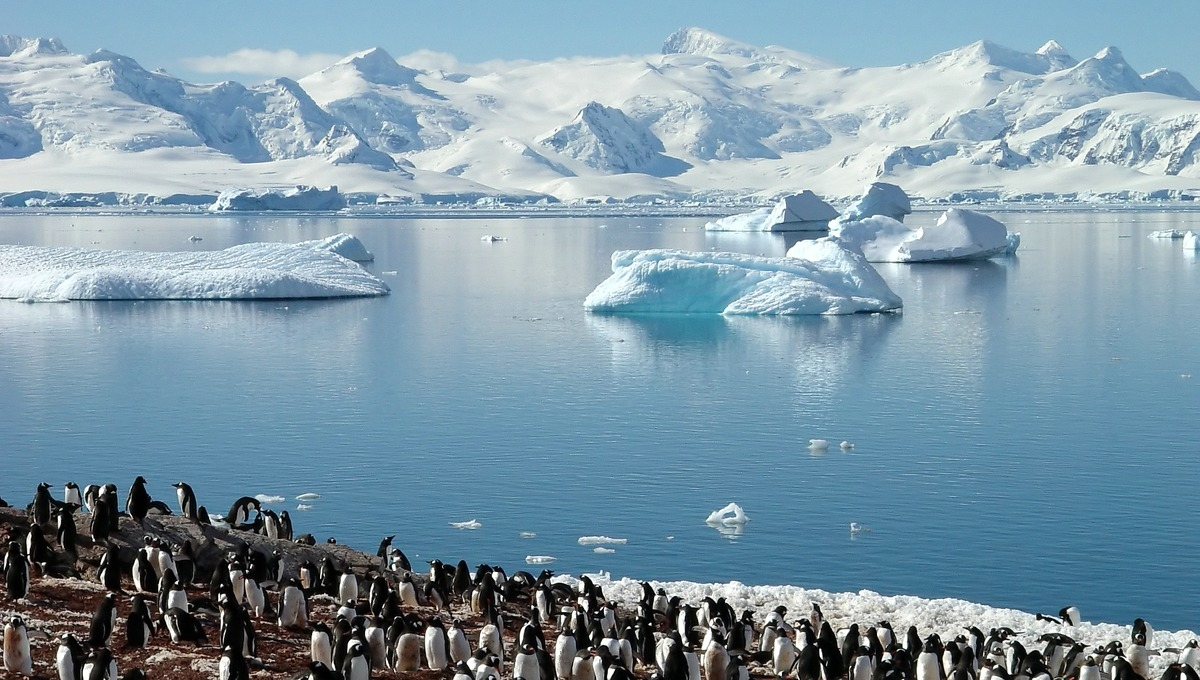 The White Continent - Penguin Colony, Antarctica