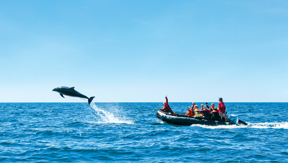 Spring expedition cruises - Lindblad in the Sea of Cortez