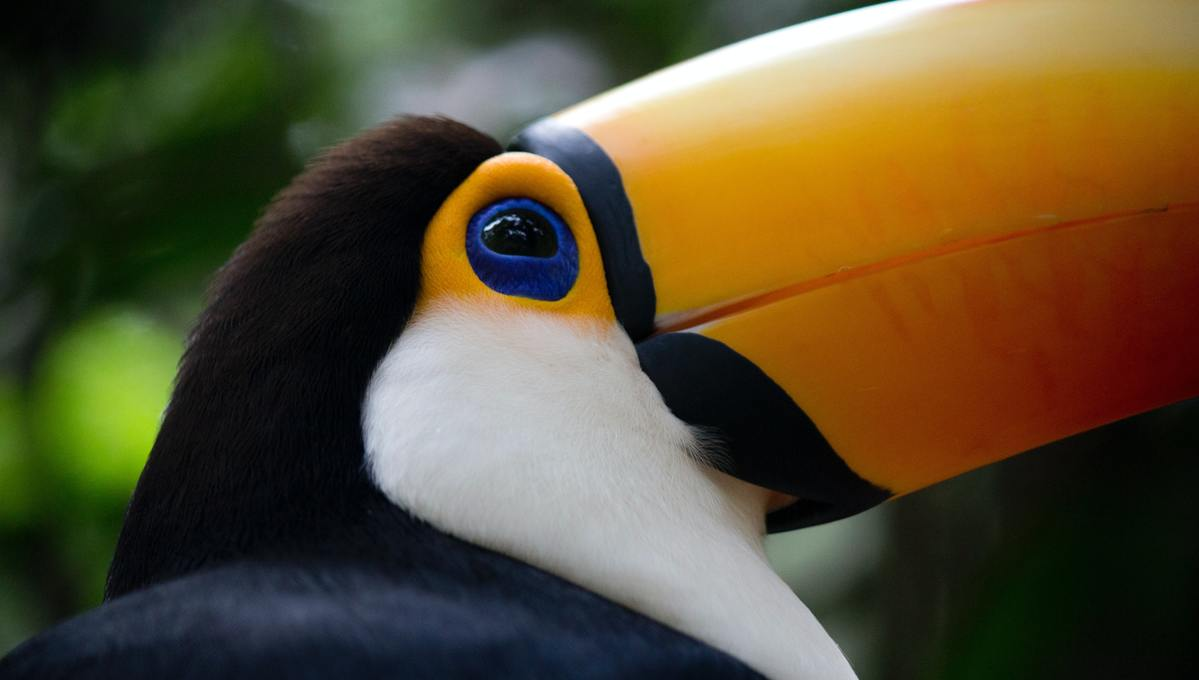 A toucan in Brazil - read our South America book, TV and film recommendations for travel inspiration