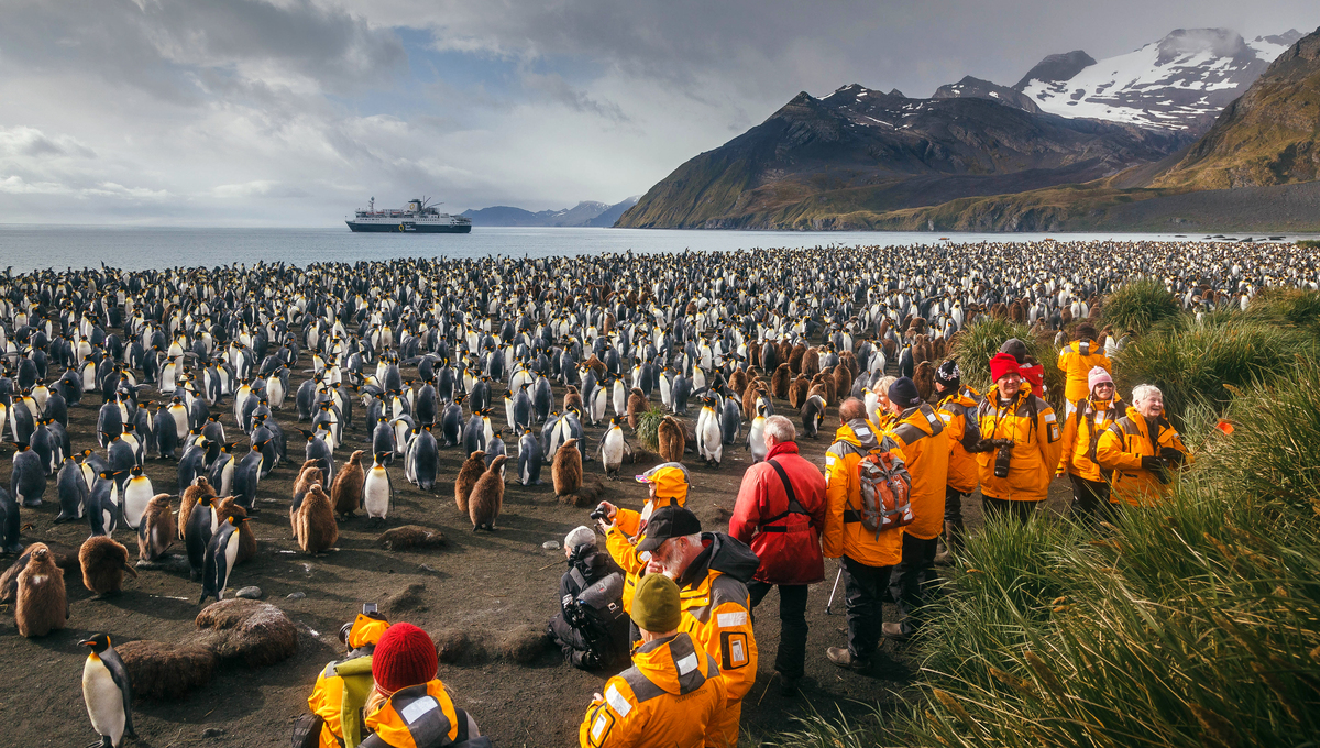 Exploring South Georgia with Quark, one of the best expedition cruise lines for solo travellers