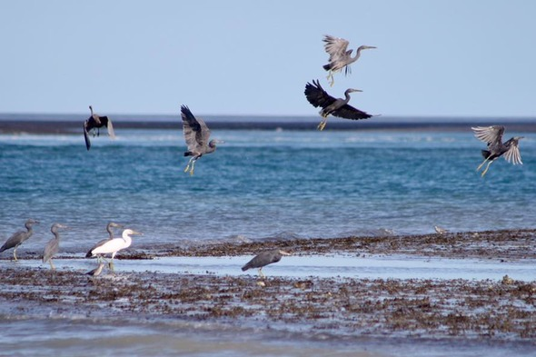 Birds on Montgomery Reef, Australia