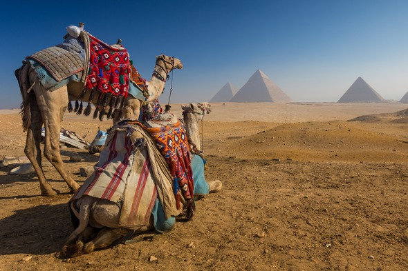 Camels and Pyramids, Egypt