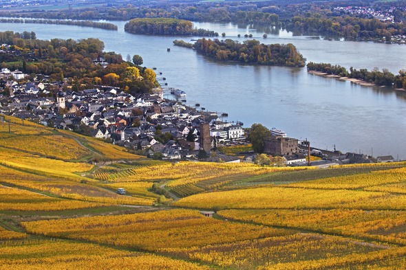 Rhine Valley at Rudesheim, Germany