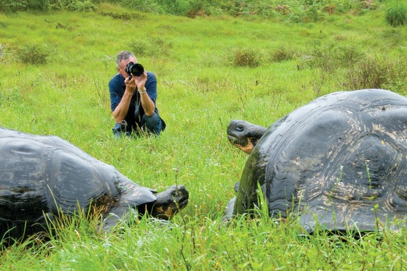 Giant tortoises in the Galapagos