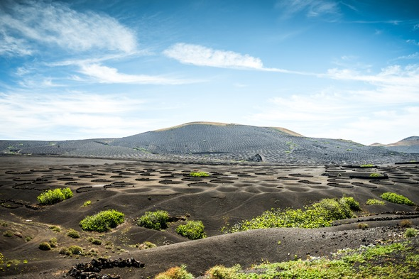 La Geria vineyards in Lanzarote, Canary Islands