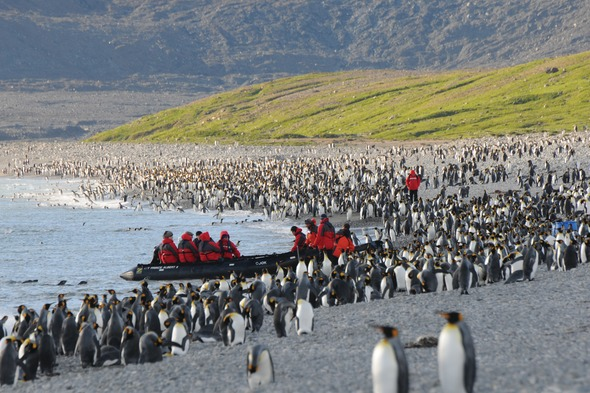 Silversea Expeditions - King penguins on South Georgia