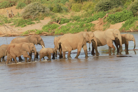 Safari so good - Elephants, Kenya