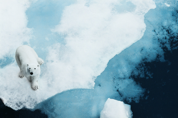 Lindblad Expeditions - Polar bear in the Arctic