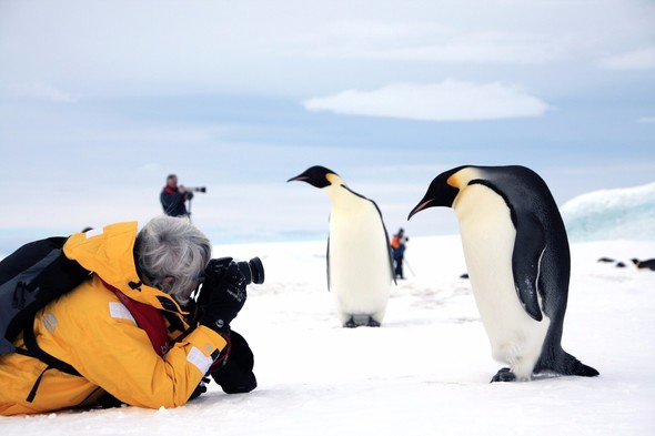Quark Expeditions - Emperor penguins