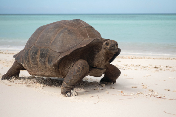 Silversea Expeditions - Giant tortoise on Aldabra, Seychelles