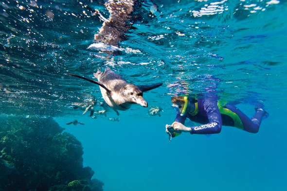 Snorkeller with underwater camera in the Galapagos