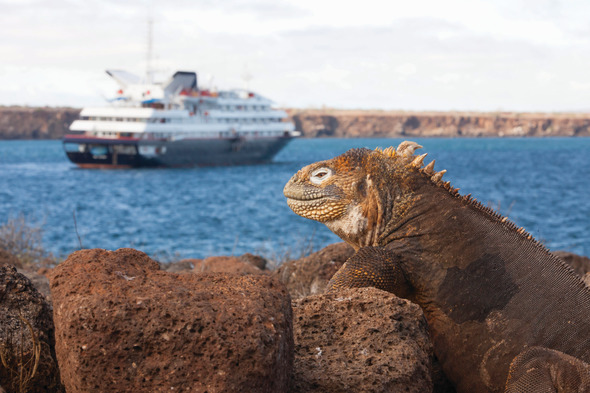Silver Galapagos and iguana