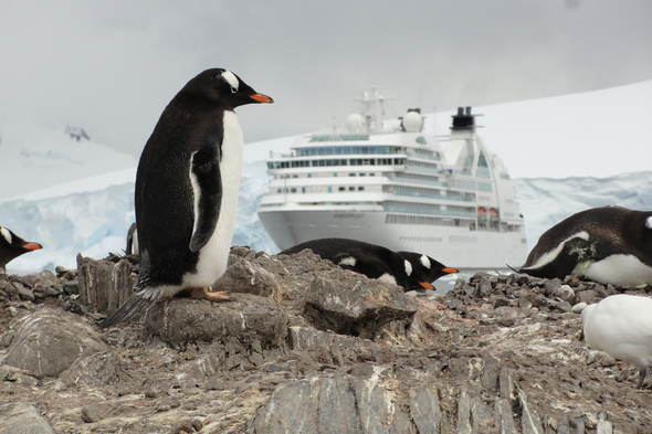 Seabourn Quest and penguins in Antarctica