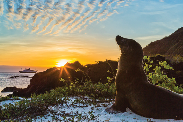 Lindblad Expeditions - National Geographic Explorer in the Galapagos