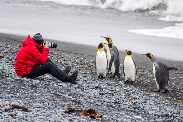 Photographing penguins on Sandy Bay, Macquarie Island, Australia