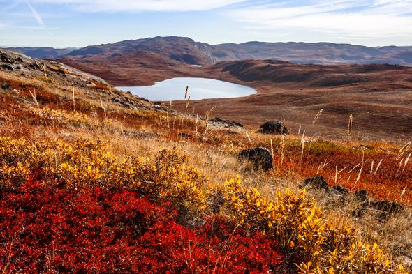 Autumn colours of the tundra near Kangerlussuaq, Greenland