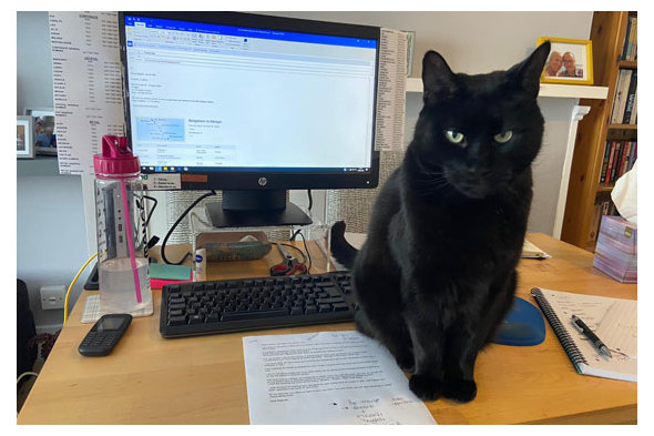 Helen's cat and home office