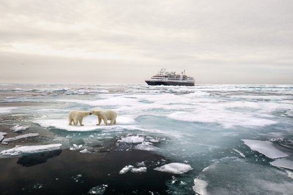 Silver Explorer and polar bears in the Arctic