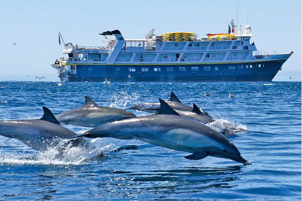 Dolphins in the Sea of Cortez, Baha California