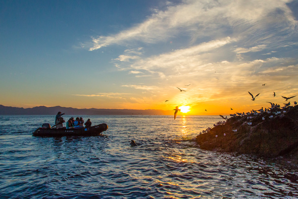 Lindblad Expeditions - Birdlife in the Sea of Cortez
