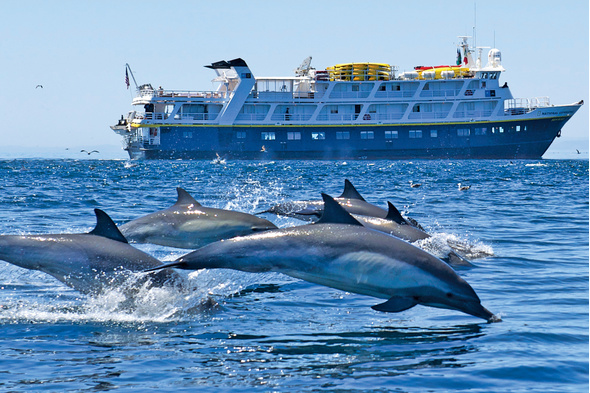 Dolphins off Baja California, Mexico