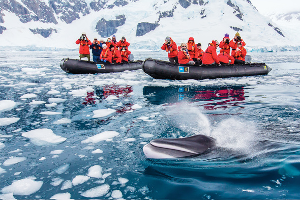 Lindblad Expeditions - Whale watching cruise in Antarctica