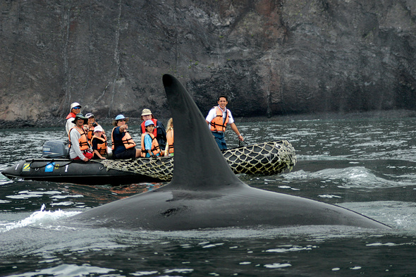 Lindblad Expeditions - Whale watching in the Galapagos