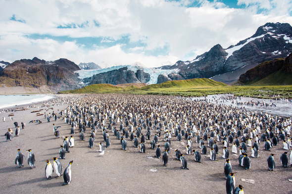 Silversea Expeditions - Penguins in South Georgia