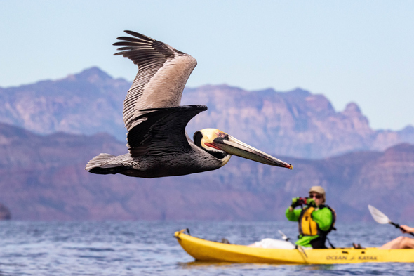 UnCruise Adventures - Kayaking in the Sea of Cortez