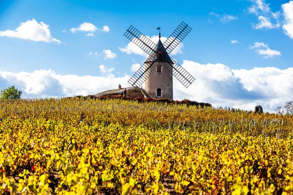 Vineyard in the Beaujolais region of France