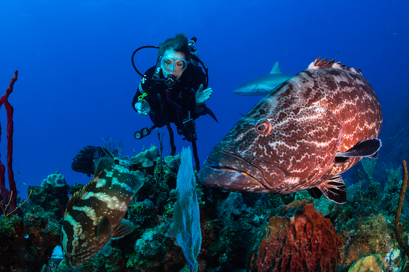 Sylvia Earle diving © Michael Aw