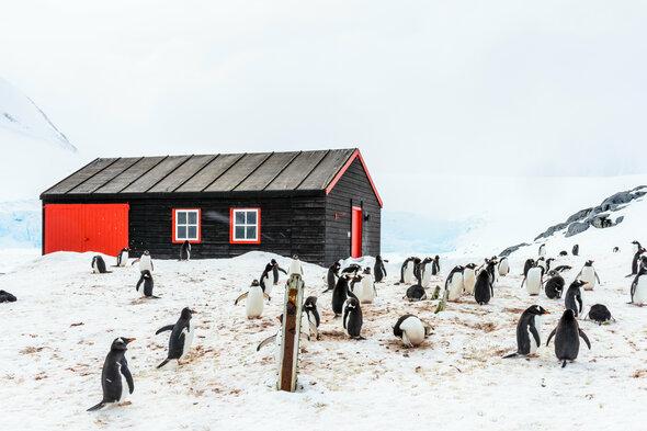 Penguins in Port Lockroy, Antarctica