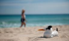 Bird on Fort Lauderdale beach