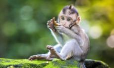 Monkey in Ubud, Bali