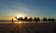 Camel riding on the beach at Broome, Australia