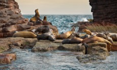 Sea lions, Sea of Cortez