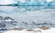 Penguins in Neko Harbour, Antarctica