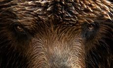 Russian Far East cruises - Brown bear