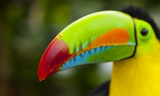 North & Central America expedition cruises - Toucan in Panama